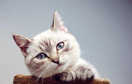 לגדל חתול- דברים שכייף לדעת